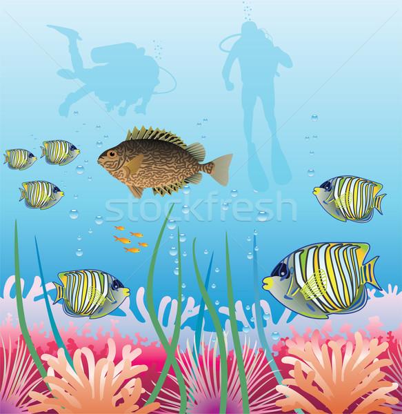 Tropikal skuba sualtı vektör balık Stok fotoğraf © freesoulproduction