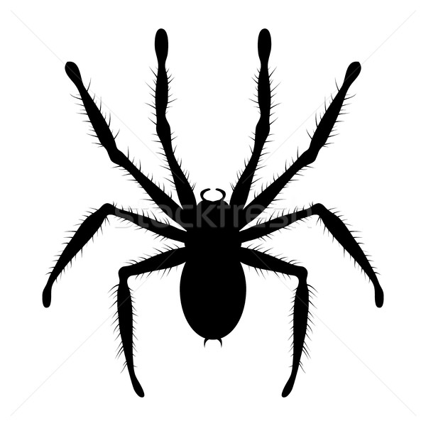 Vector zwart wit tekening giftig tarantula spin Stockfoto © freesoulproduction