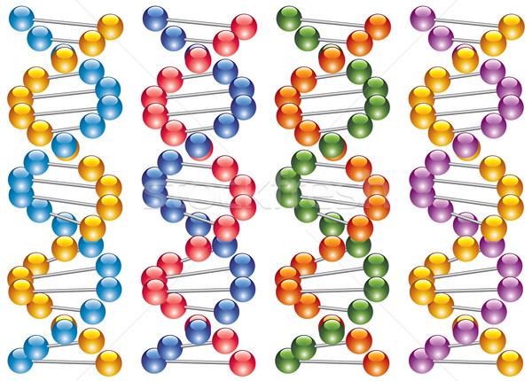 set of colorful dna strands Stock photo © freesoulproduction
