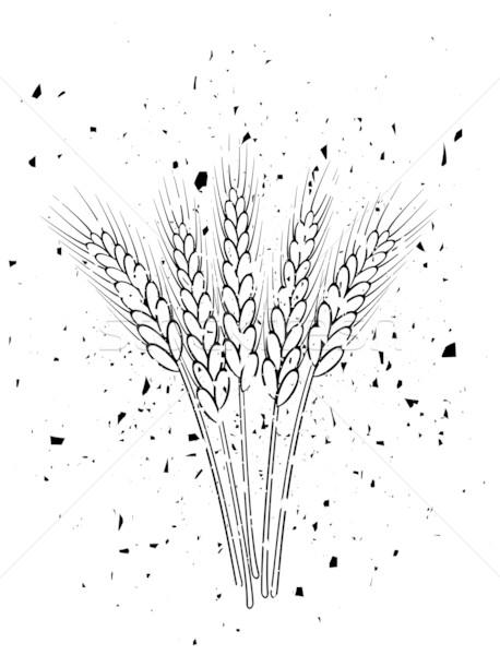 小麦简笔画儿童画