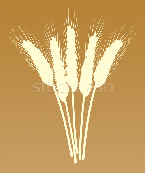 vector wheat ears Stock photo © freesoulproduction