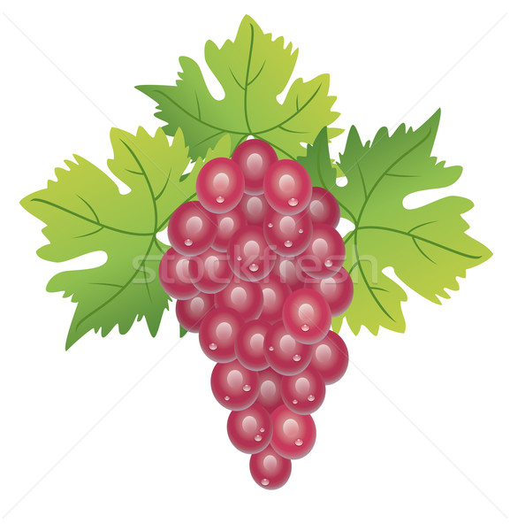 vector grape cluster Stock photo © freesoulproduction