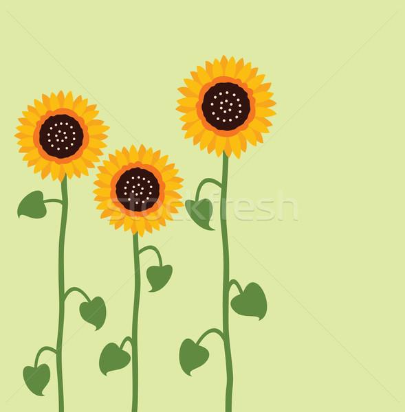Vektor napraforgó nyár virág boldog levél Stock fotó © freesoulproduction