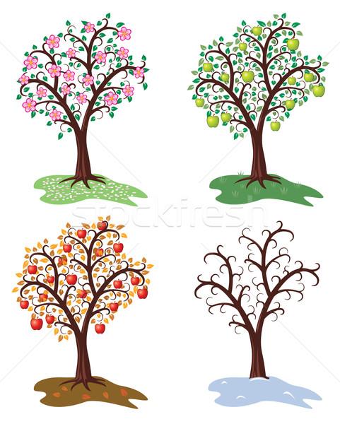 Wektora zestaw cztery pory roku jabłoń drzewo wiosną Zdjęcia stock © freesoulproduction