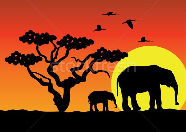ベクトル アフリカ ツリー 森林 自然 ストックフォト © freesoulproduction