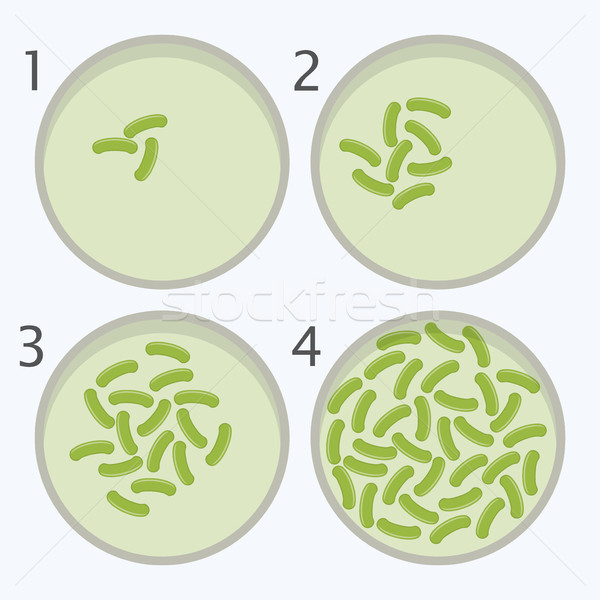 vector bacteria growth stages. bacterium in petri dishes Stock photo © freesoulproduction
