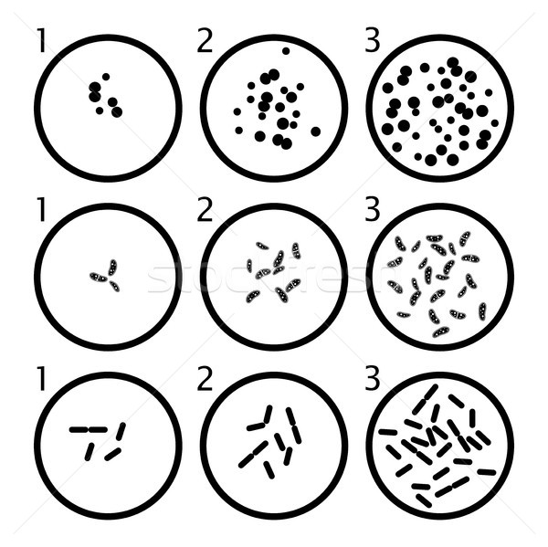 vector bacteria growth stages. black bacterium cells in petri di Stock photo © freesoulproduction