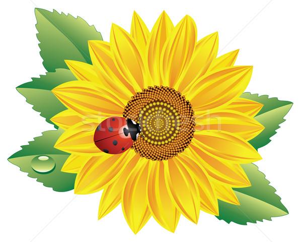 Girassol joaninha vetor vermelho flor abstrato Foto stock © freesoulproduction