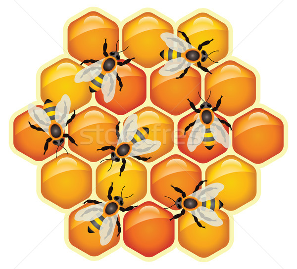 vector working bees on honeycomb cells Stock photo © freesoulproduction
