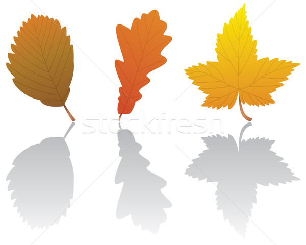 vector fall leaves Stock photo © freesoulproduction