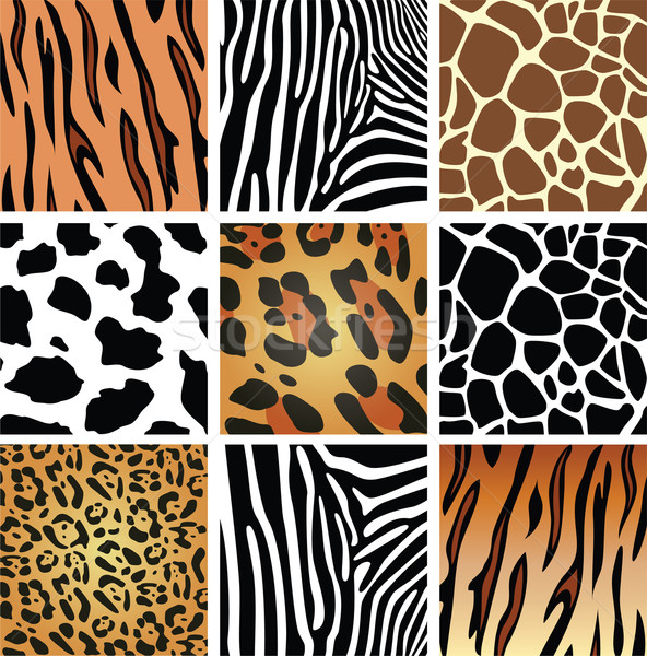 Vector animales piel texturas tigre cebra Foto stock © freesoulproduction