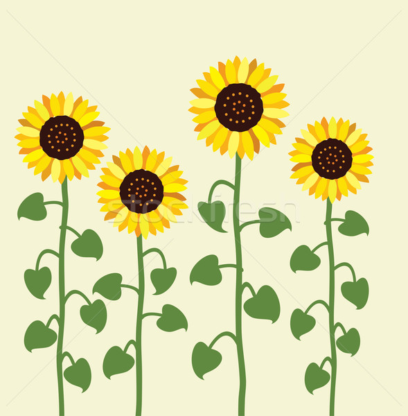 vector sunflower summer background Stock photo © freesoulproduction