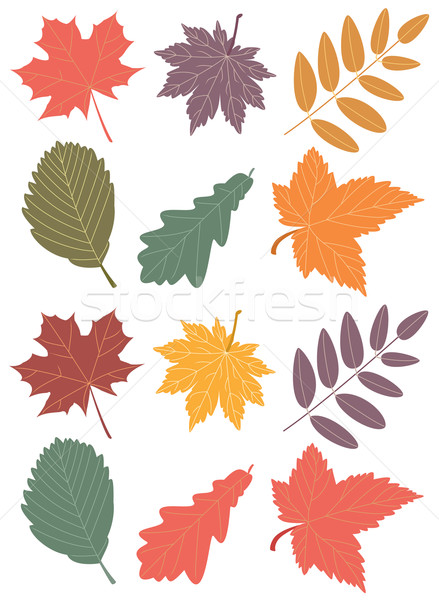 vector autumn leaves Stock photo © freesoulproduction