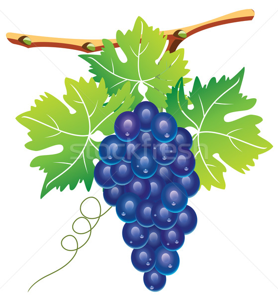 grape cluster  Stock photo © freesoulproduction