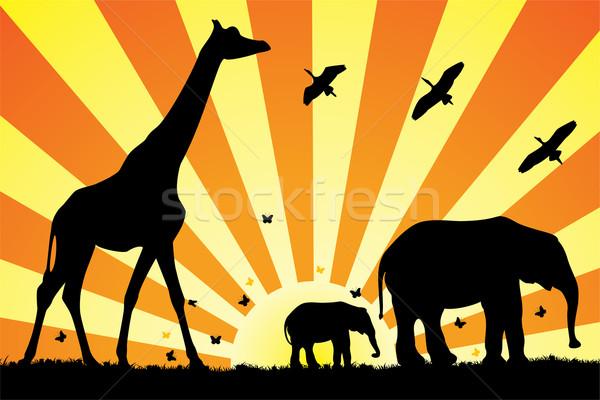 ストックフォト: ベクトル · キリン · アフリカ · 家族 · 草