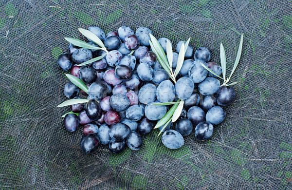 Photo stock: Olives · net · alimentaire · nature · fruits