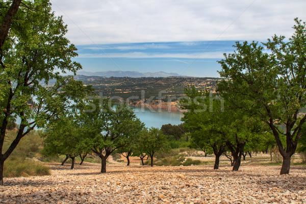 Amande domaine lac arbre paysage fruits Photo stock © Freila