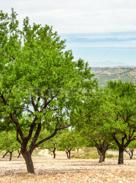 Amande domaine arbre paysage fruits agriculture Photo stock © Freila