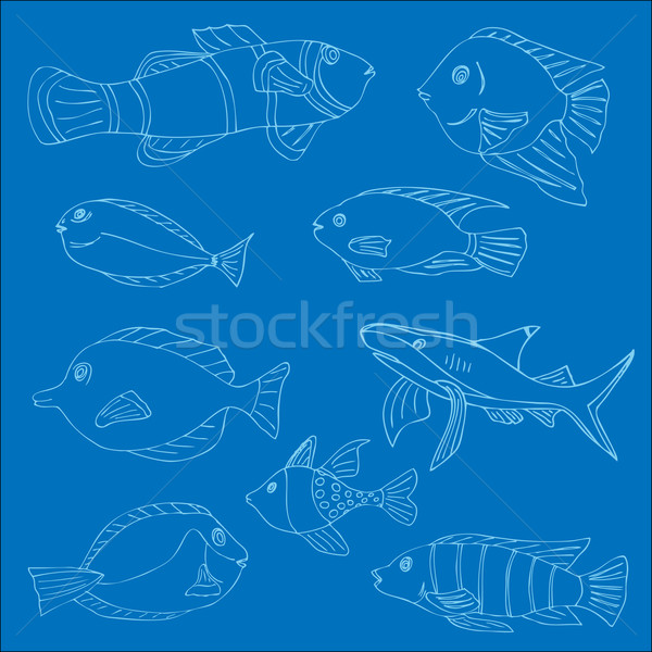 Set of tropical fish Stock photo © frescomovie