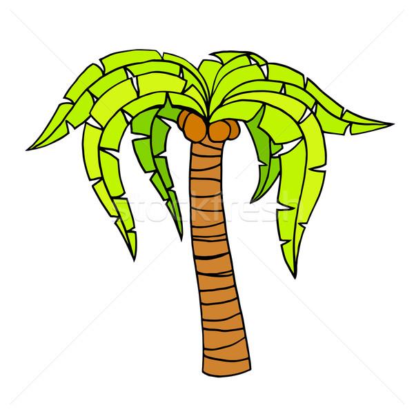 Tropical palm tree Stock photo © frescomovie