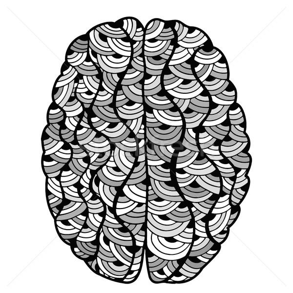 Cervello umano doodle decorativo curve contorno Foto d'archivio © frescomovie