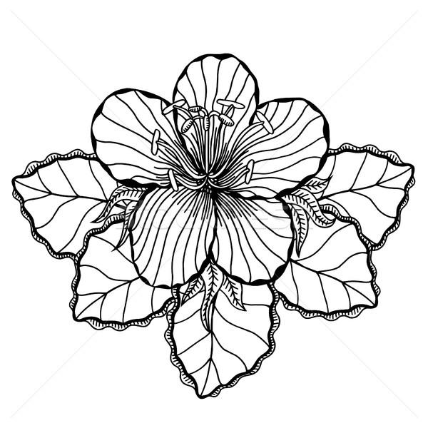 Virág fehér virág fehér fekete vonalak firka Stock fotó © frescomovie