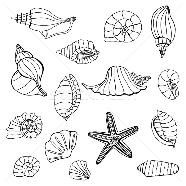 Seashell set collection. Stock photo © frescomovie