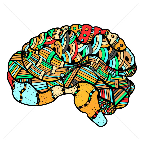Colored Sketchy Human Brain Stock photo © frescomovie