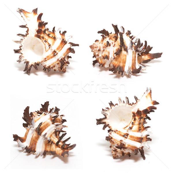 shells Stock photo © frescomovie