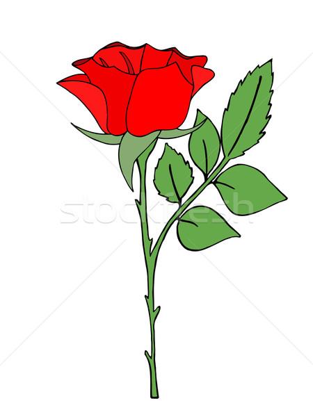 Stok fotoğraf: Parlak · kırmızı · gül · çiçek · bahar · yalıtılmış · beyaz