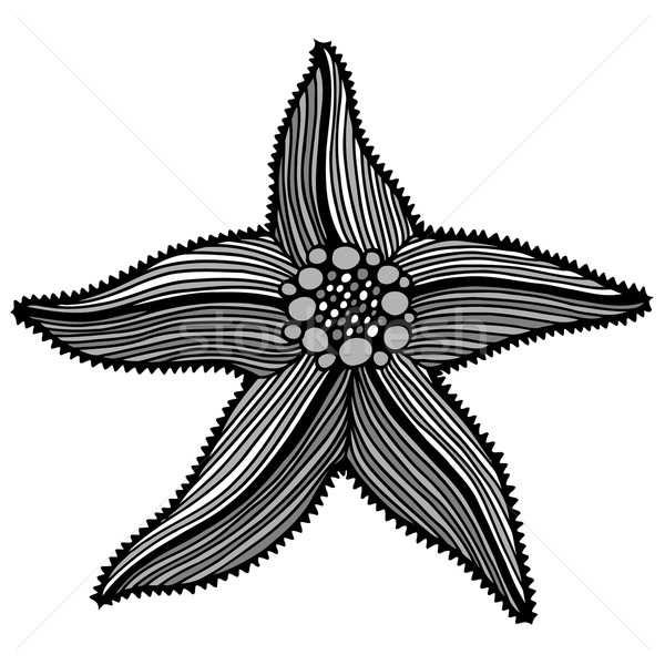 Black contour starfish illustration. Stock photo © frescomovie