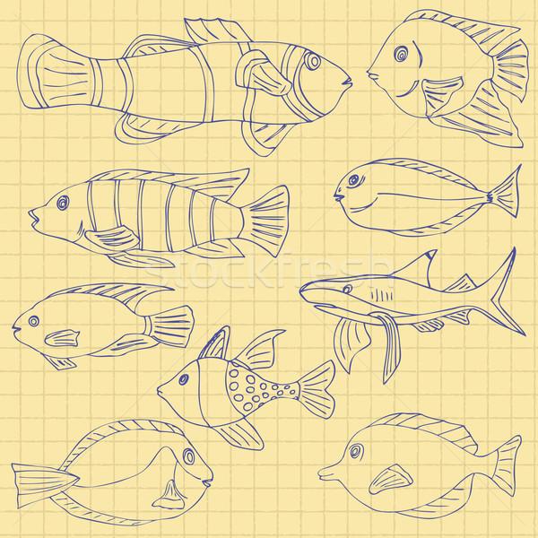 Esboço mar peixe escolas caderno gaiola Foto stock © frescomovie