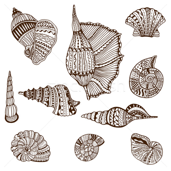 Seashell set collection Stock photo © frescomovie
