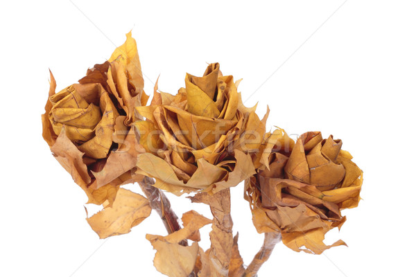 autumn leaves Stock photo © frescomovie