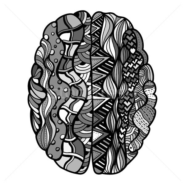 Foto stock: Cérebro · humano · rabisco · decorativo · curvas