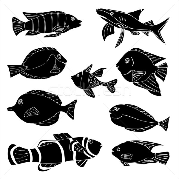 Fish Stock photo © frescomovie