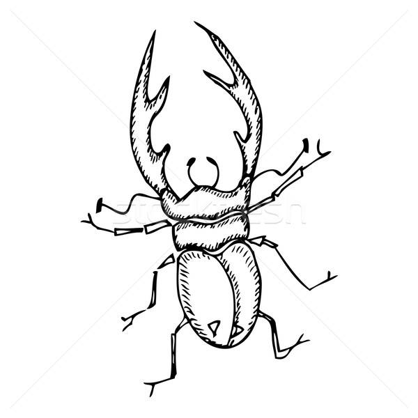 Beetle Stock photo © frescomovie
