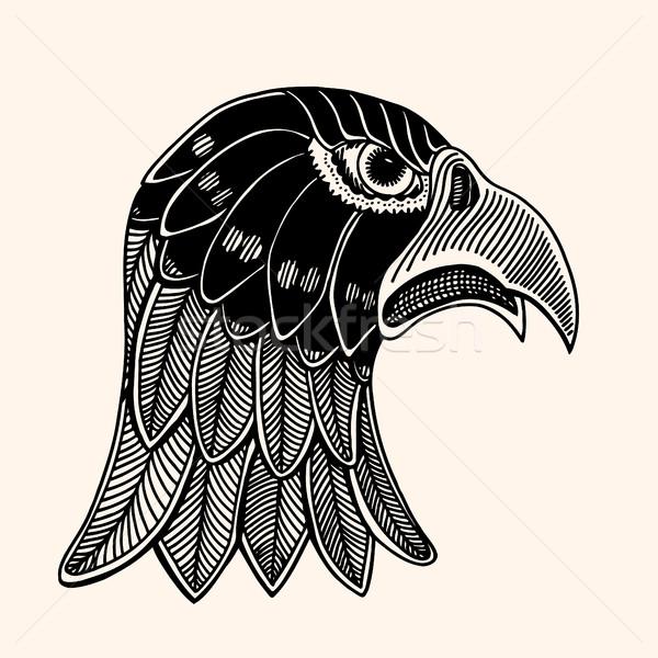 Hand gezeichnet Kopf Adler detaillierte Illustration Vektor Stock foto © frescomovie