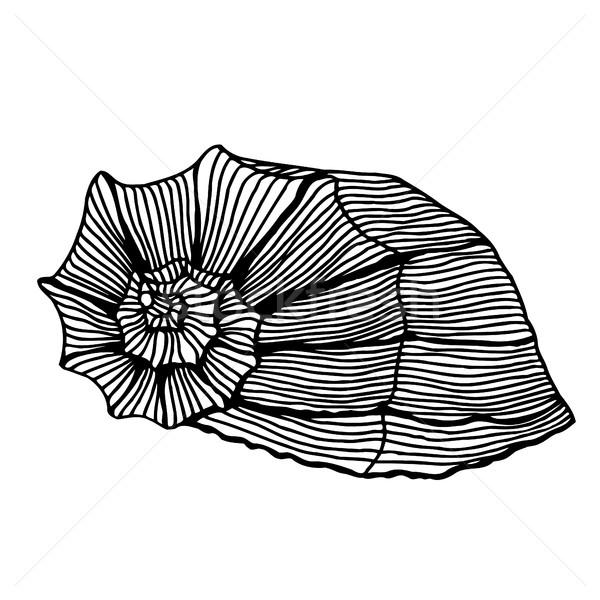 black sea cockleshell. Stock photo © frescomovie