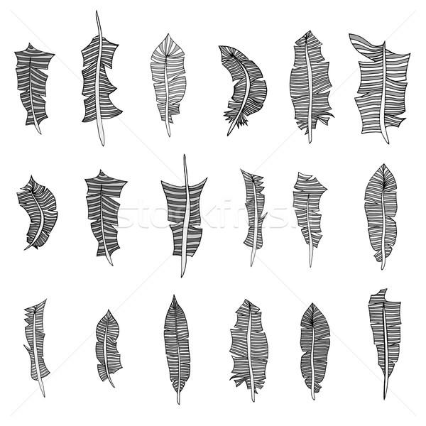 セット 羽毛 羽毛 孤立した 白 テクスチャ ストックフォト © frescomovie