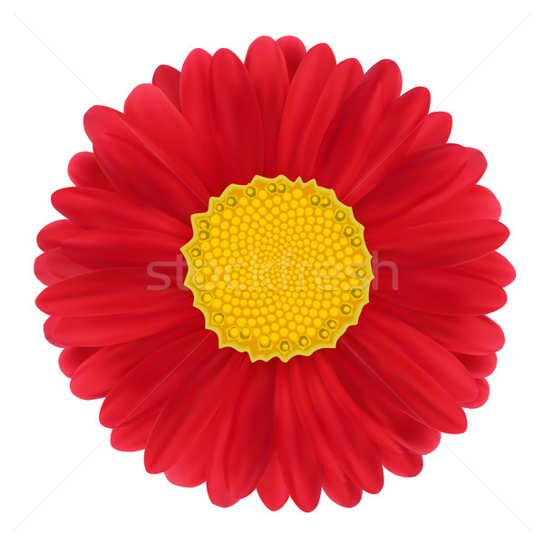 Rood bloem afbeelding voorjaar natuur ontwerp Stockfoto © frescomovie