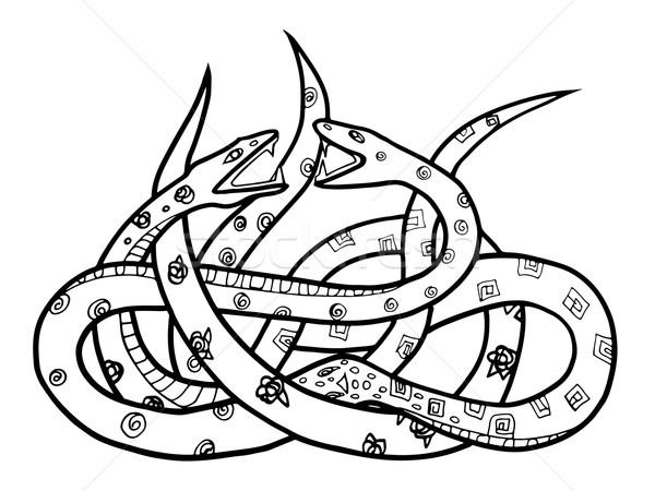 two snakes Stock photo © frescomovie