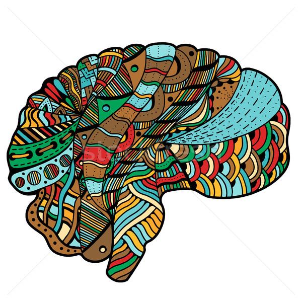 Színes vázlatos emberi agy firka dekoratív hajlatok Stock fotó © frescomovie