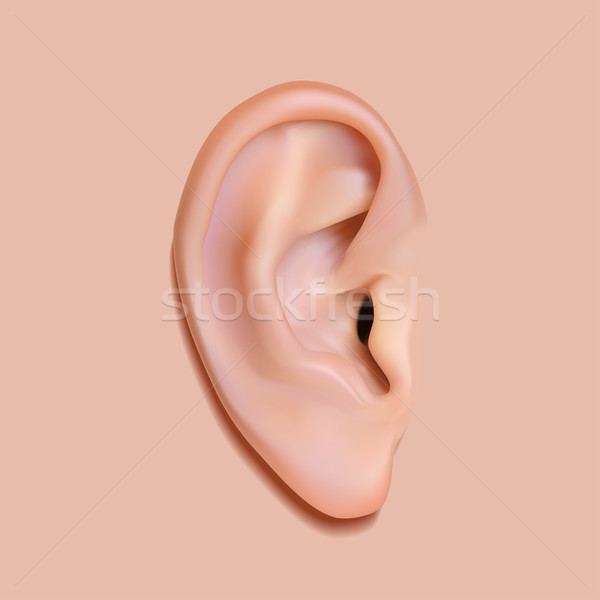 Human ear Stock photo © frescomovie
