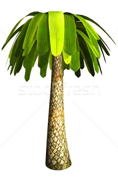 Palm tree Stock photo © frescomovie