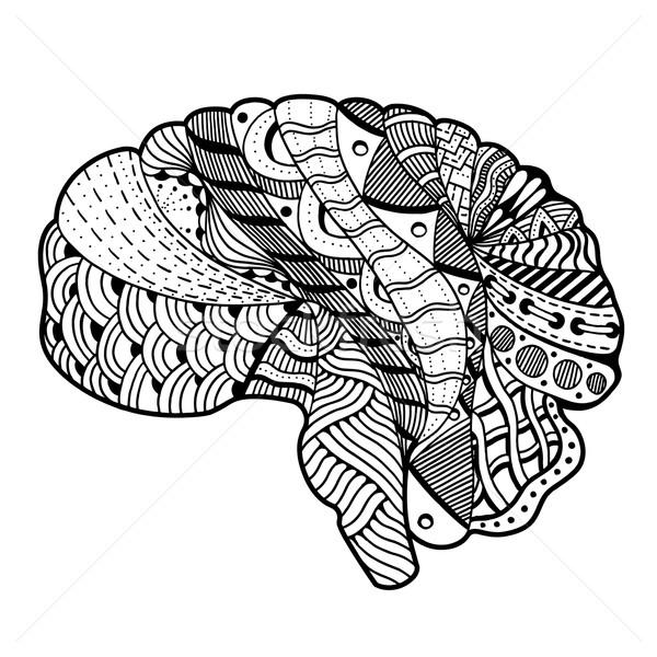 Cérebro humano rabisco decorativo curvas Foto stock © frescomovie