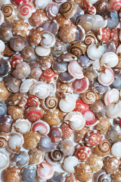 seashells Stock photo © frescomovie