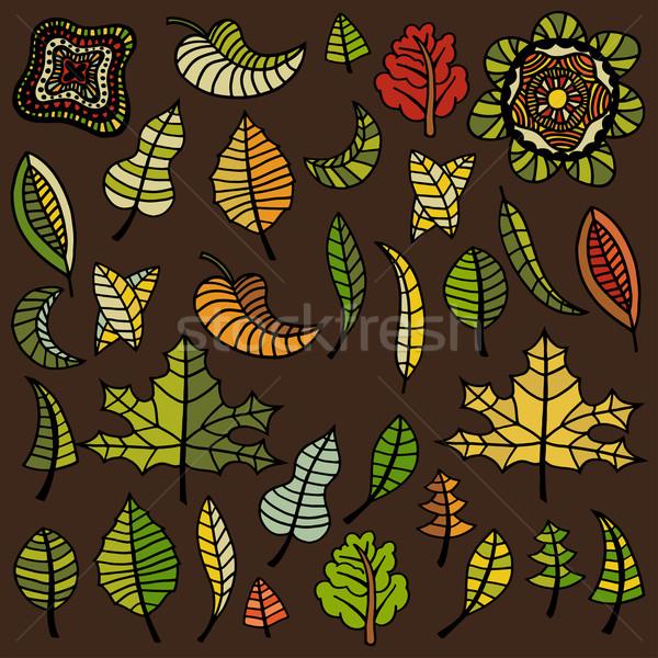 Establecer hojas de otoño grande diferente árbol especies Foto stock © frescomovie