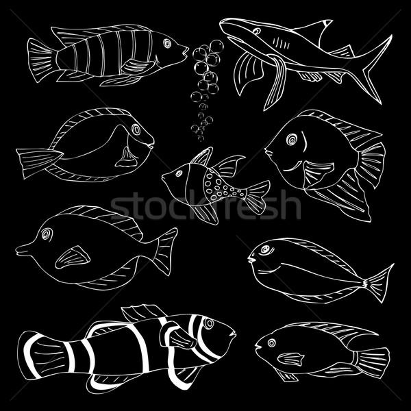 Sketch of sea Fish Stock photo © frescomovie