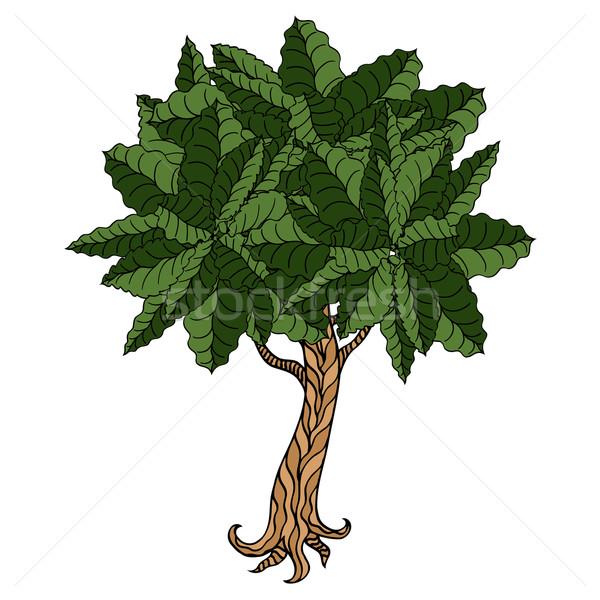 Baum Blätter Hand gezeichnet Bild Buch Holz Stock foto © frescomovie
